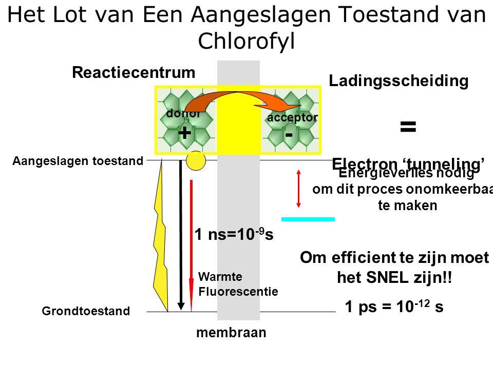 Het Lot van Een Aangeslagen Toestand van Chlorofyl Aangeslagen toestand Grondtoestand acceptor donor +- Energieverlies nodig om dit proces onomkeerbaar te maken Ladingsscheiding = Electron 'tunneling' 1 ns=10 -9 s Warmte Fluorescentie Om efficient te zijn moet het SNEL zijn!.