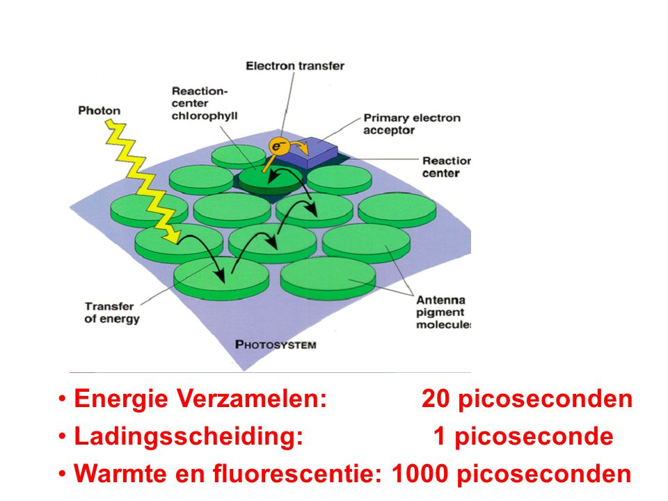 Energie Verzamelen: 20 picoseconden Ladingsscheiding: 1 picoseconde Warmte en fluorescentie: 1000 picoseconden
