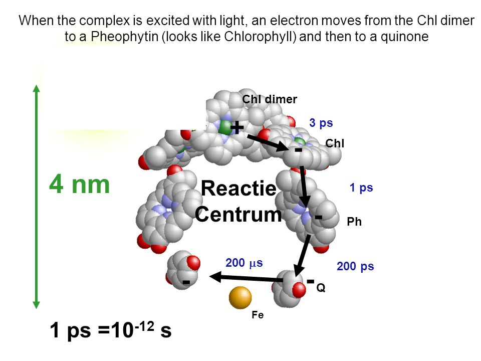 Chl dimer Ph Q Fe Chl 3 ps 1 ps 200 ps LIGHT When the complex is excited with light, an electron moves from the Chl dimer to a Pheophytin (looks like