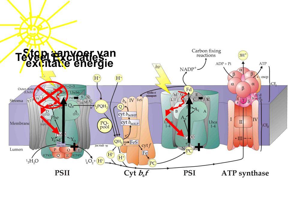 Aanvoer van excitatie energie Stop aanvoer van excitatie energie Teveel Excitaties + - + -