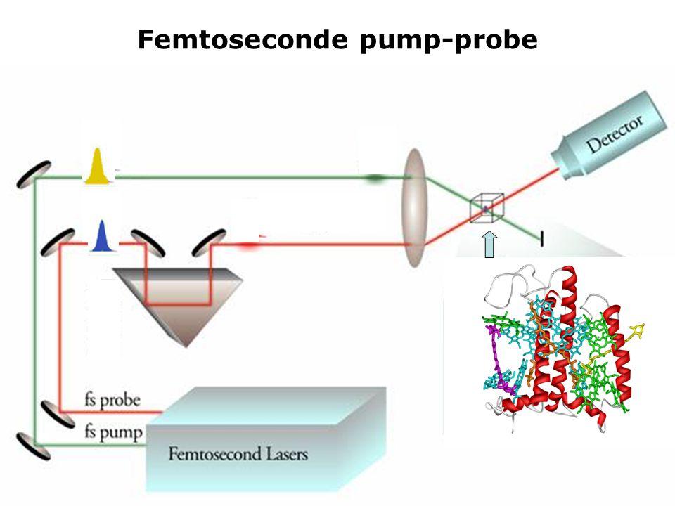 Femtoseconde pump-probe