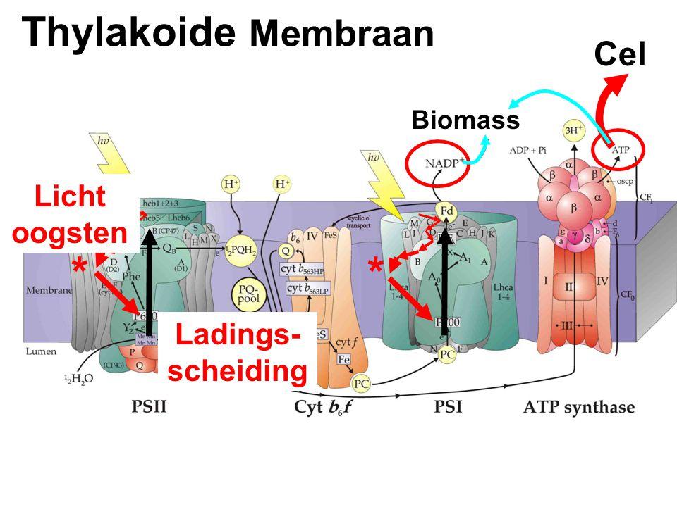 Thylakoide Membraan Cel Biomass ** Licht oogsten Ladings- scheiding