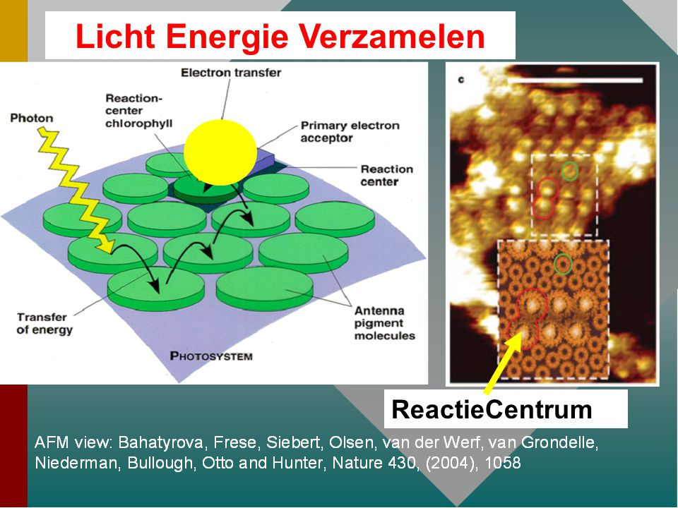 Licht Energie Verzamelen ReactieCentrum
