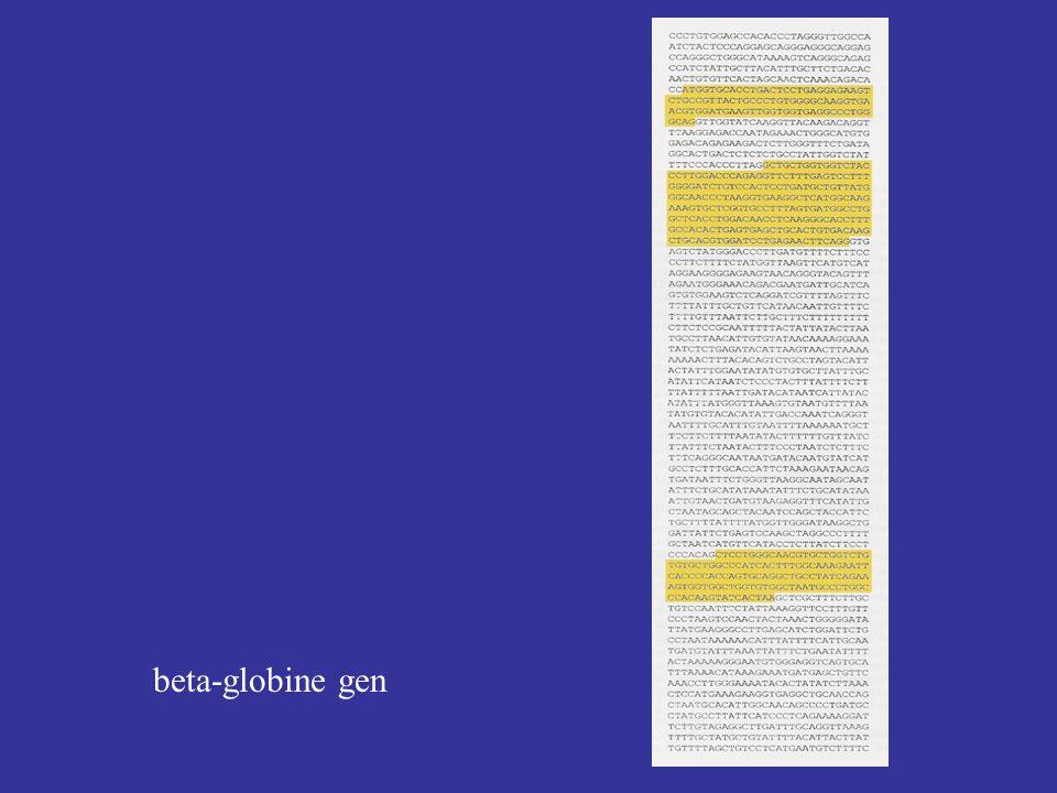 beta-globine gen