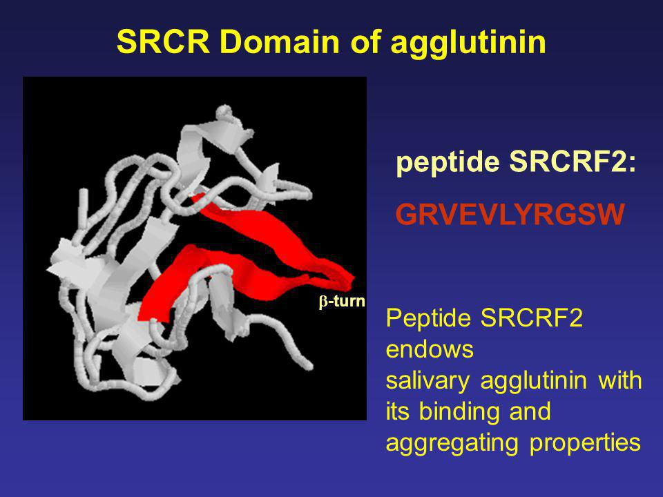 peptide SRCRF2: GRVEVLYRGSW SRCR Domain of agglutinin Peptide SRCRF2 endows salivary agglutinin with its binding and aggregating properties  -turn