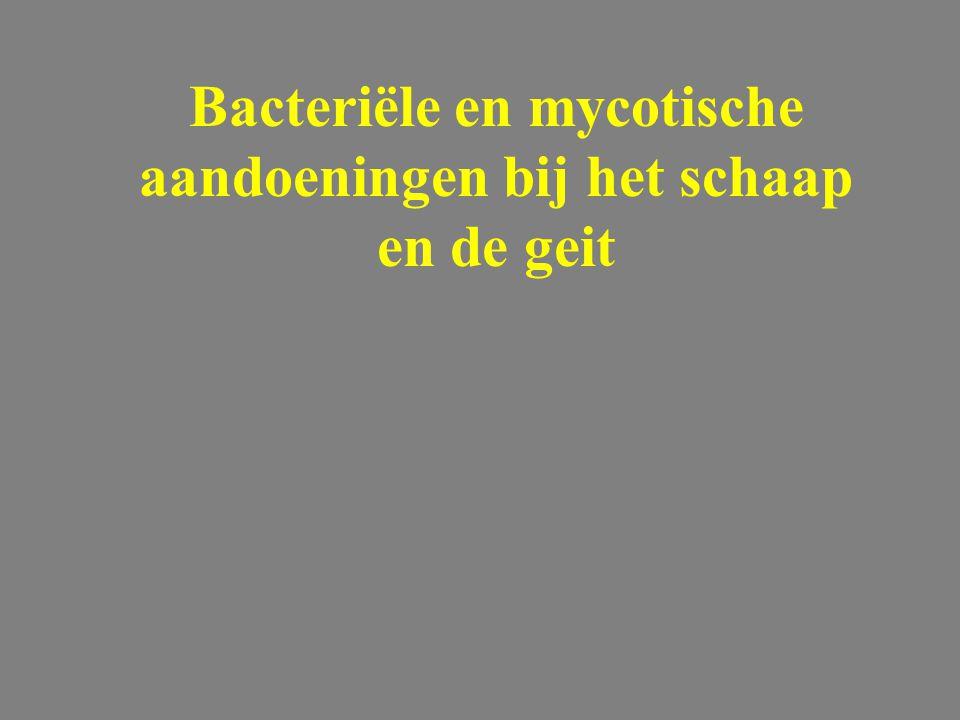 Bacteriële en mycotische aandoeningen bij het schaap en de geit