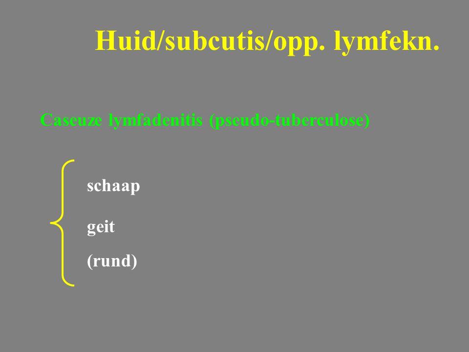 Caseuze lymfadenitis (pseudo-tuberculose) schaap geit (rund) Huid/subcutis/opp. lymfekn.