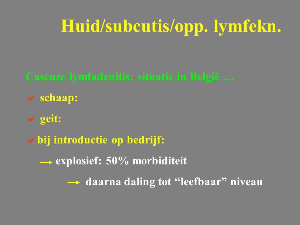 """Caseuze lymfadenitis: situatie in België …  schaap:  geit:  bij introductie op bedrijf: explosief: 50% morbiditeit daarna daling tot """"leefbaar"""" niv"""