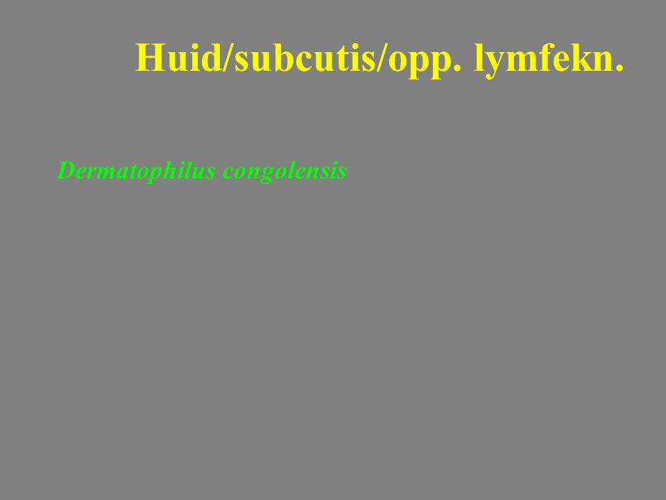 Dermatophilus congolensis Huid/subcutis/opp. lymfekn.