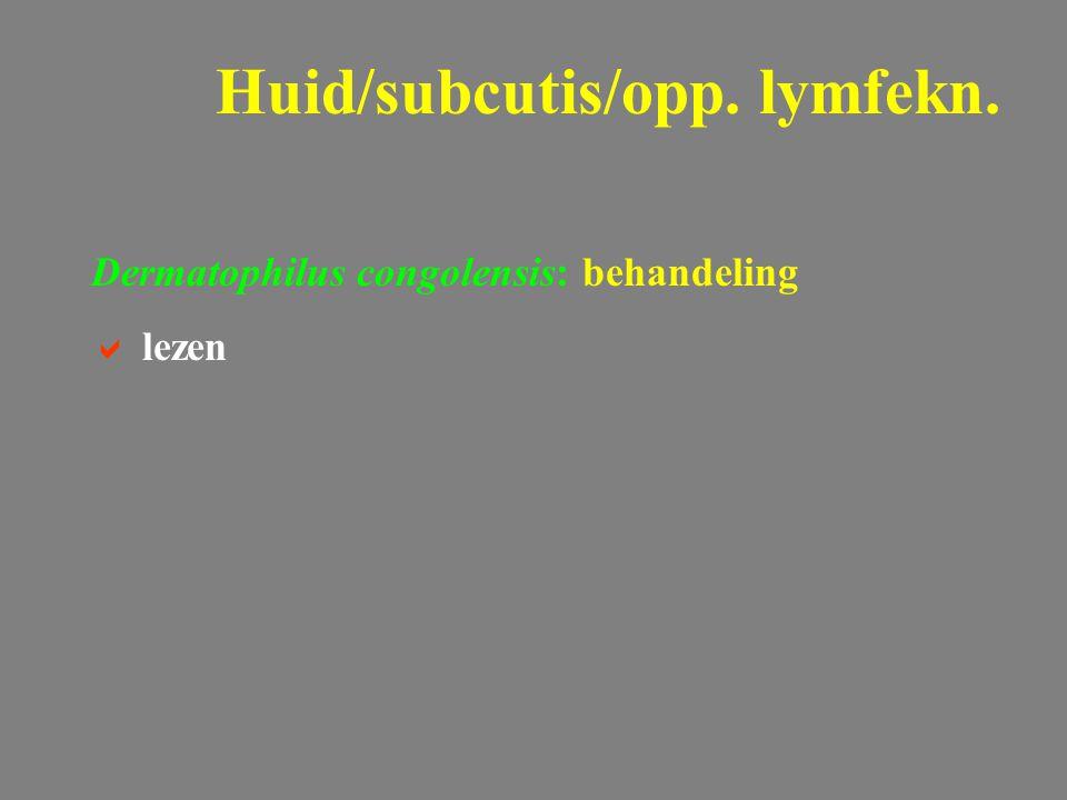 Dermatophilus congolensis: behandeling  lezen Huid/subcutis/opp. lymfekn.