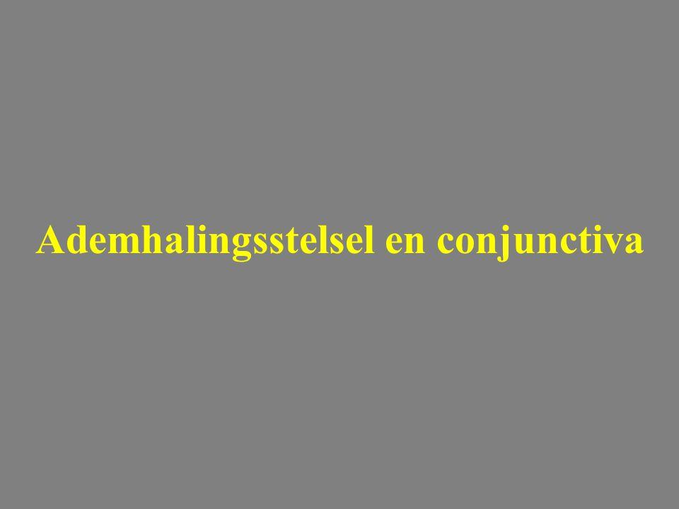 Ademhalingsstelsel en conjunctiva