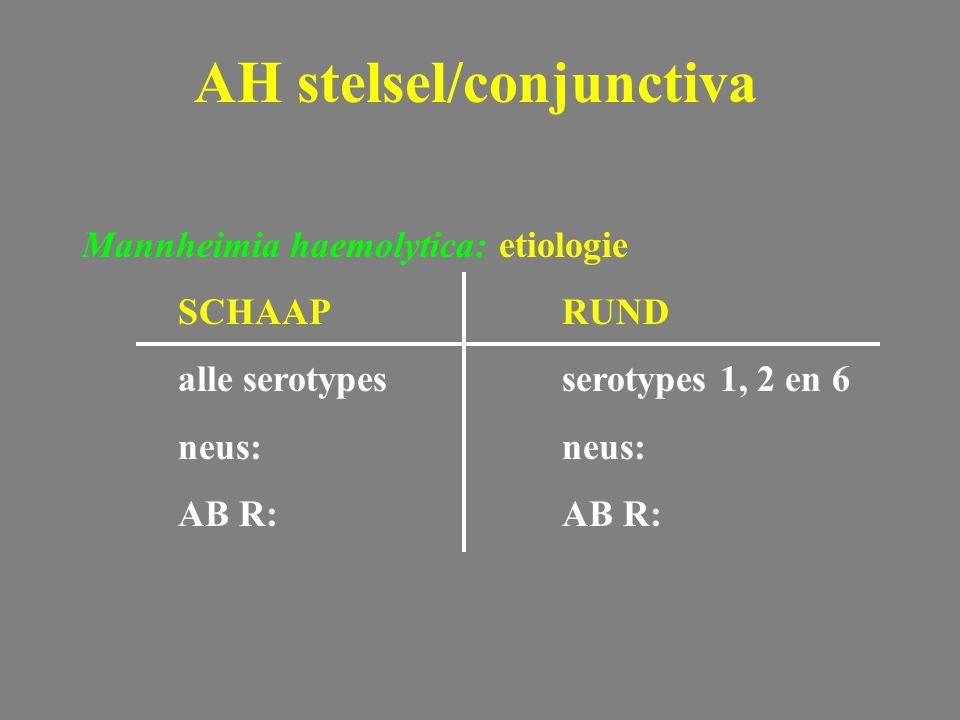 Mannheimia haemolytica: etiologie SCHAAPRUND alle serotypesserotypes 1, 2 en 6 neus: AB R: AH stelsel/conjunctiva