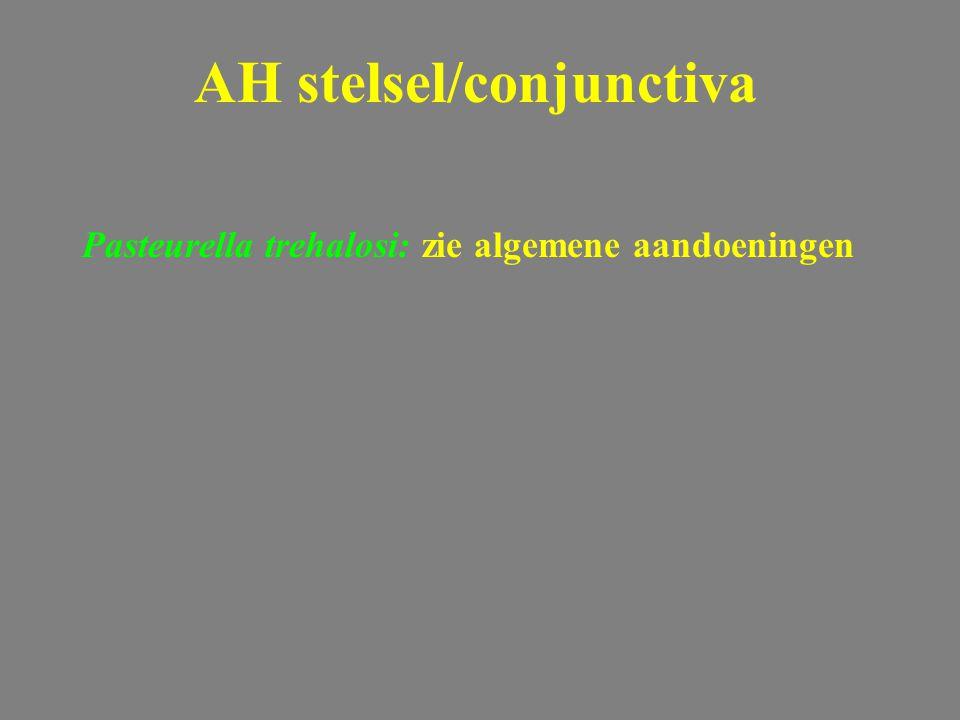 Pasteurella trehalosi: zie algemene aandoeningen AH stelsel/conjunctiva