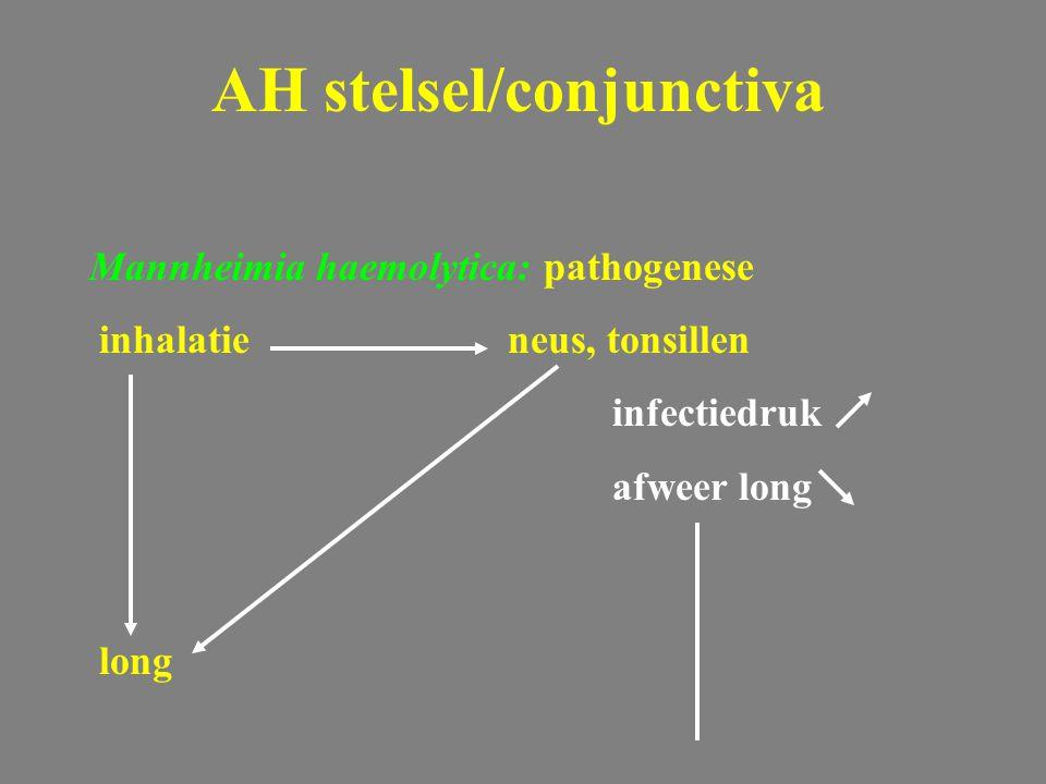 Mannheimia haemolytica: pathogenese inhalatieneus, tonsillen infectiedruk afweer long long AH stelsel/conjunctiva