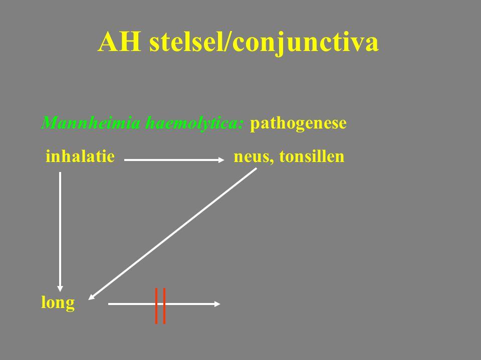 Mannheimia haemolytica: pathogenese inhalatieneus, tonsillen long AH stelsel/conjunctiva