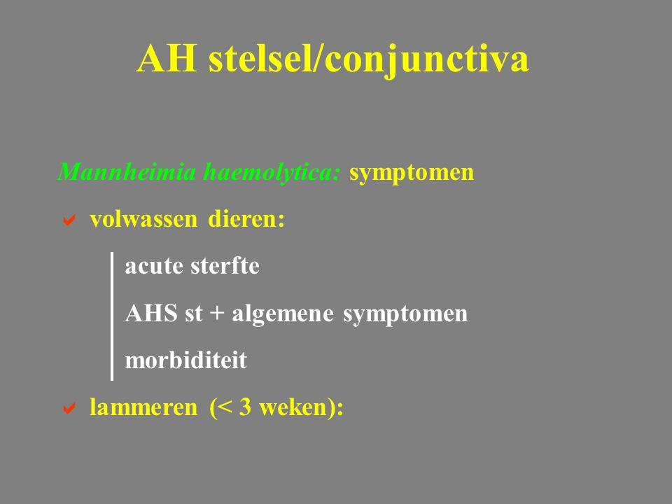 Mannheimia haemolytica: symptomen  volwassen dieren: acute sterfte AHS st + algemene symptomen morbiditeit  lammeren (< 3 weken): AH stelsel/conjunc