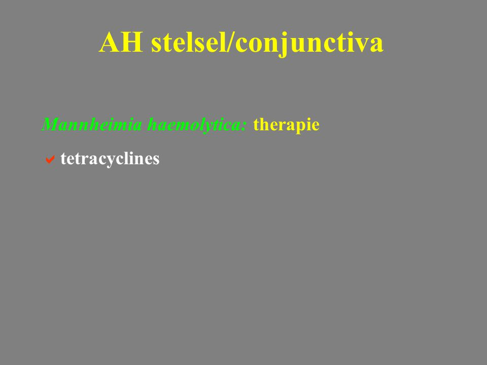 Mannheimia haemolytica: therapie  tetracyclines AH stelsel/conjunctiva