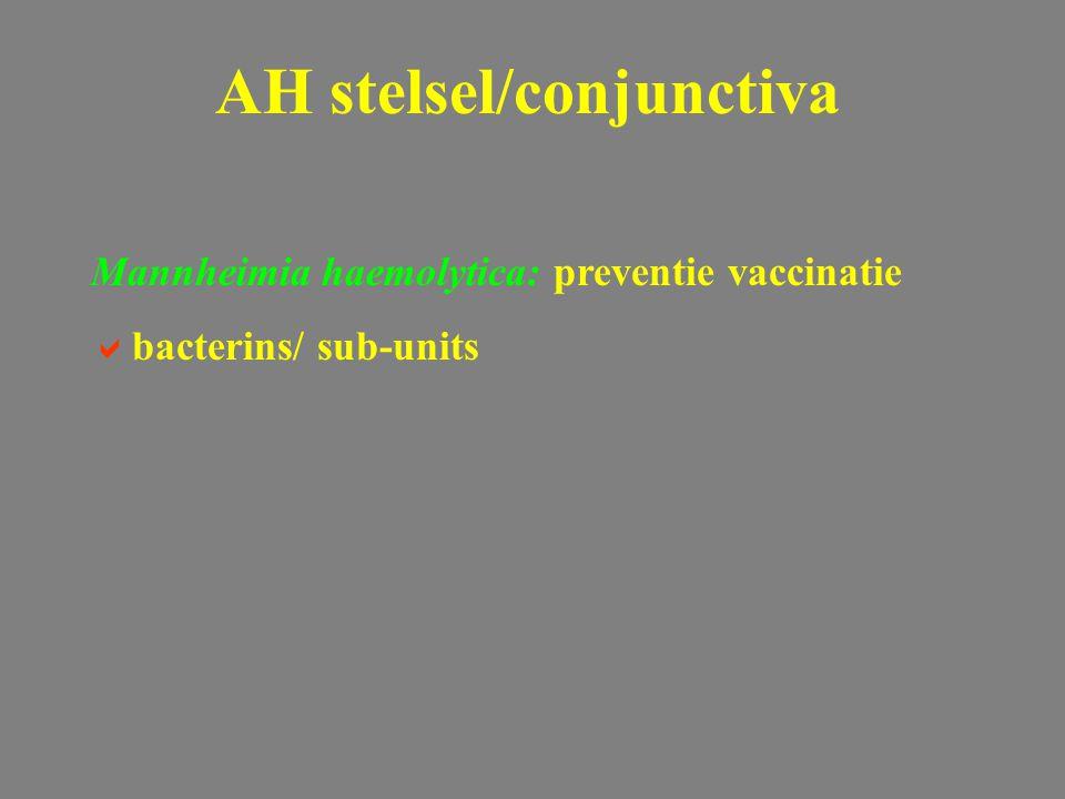 Mannheimia haemolytica: preventie vaccinatie  bacterins/ sub-units AH stelsel/conjunctiva