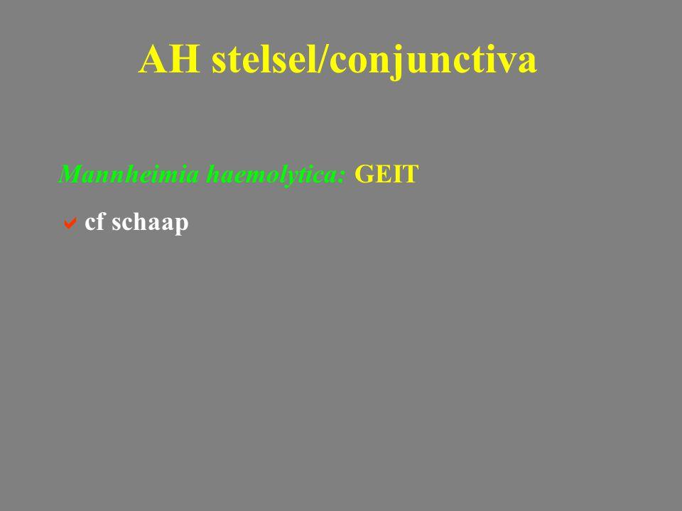 Mannheimia haemolytica: GEIT  cf schaap AH stelsel/conjunctiva