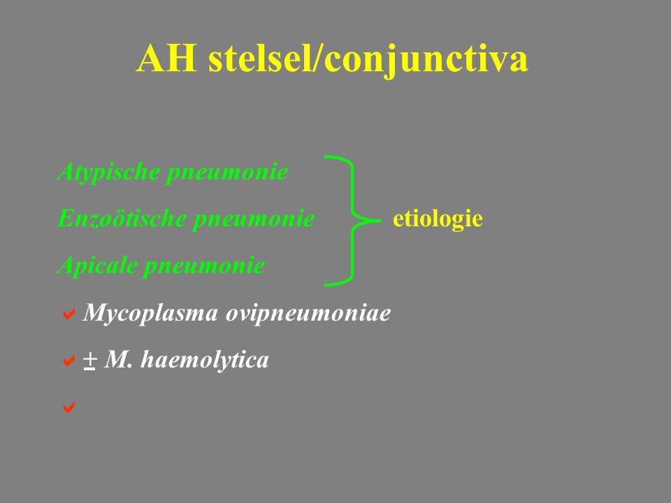 Atypische pneumonie Enzoötische pneumonieetiologie Apicale pneumonie  Mycoplasma ovipneumoniae  + M. haemolytica  AH stelsel/conjunctiva