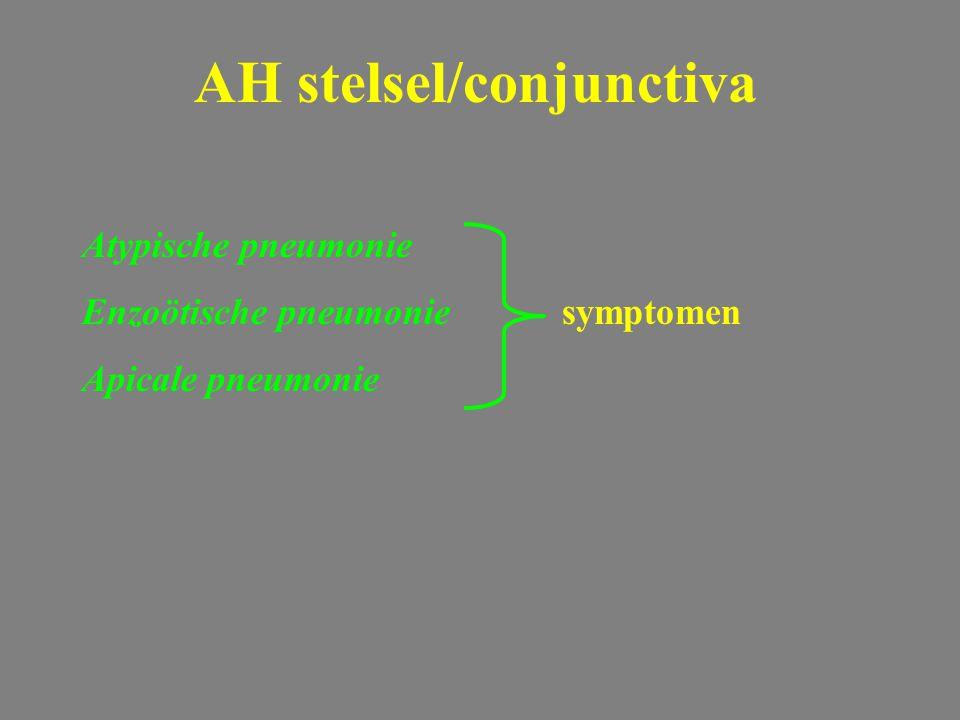 Atypische pneumonie Enzoötische pneumoniesymptomen Apicale pneumonie AH stelsel/conjunctiva
