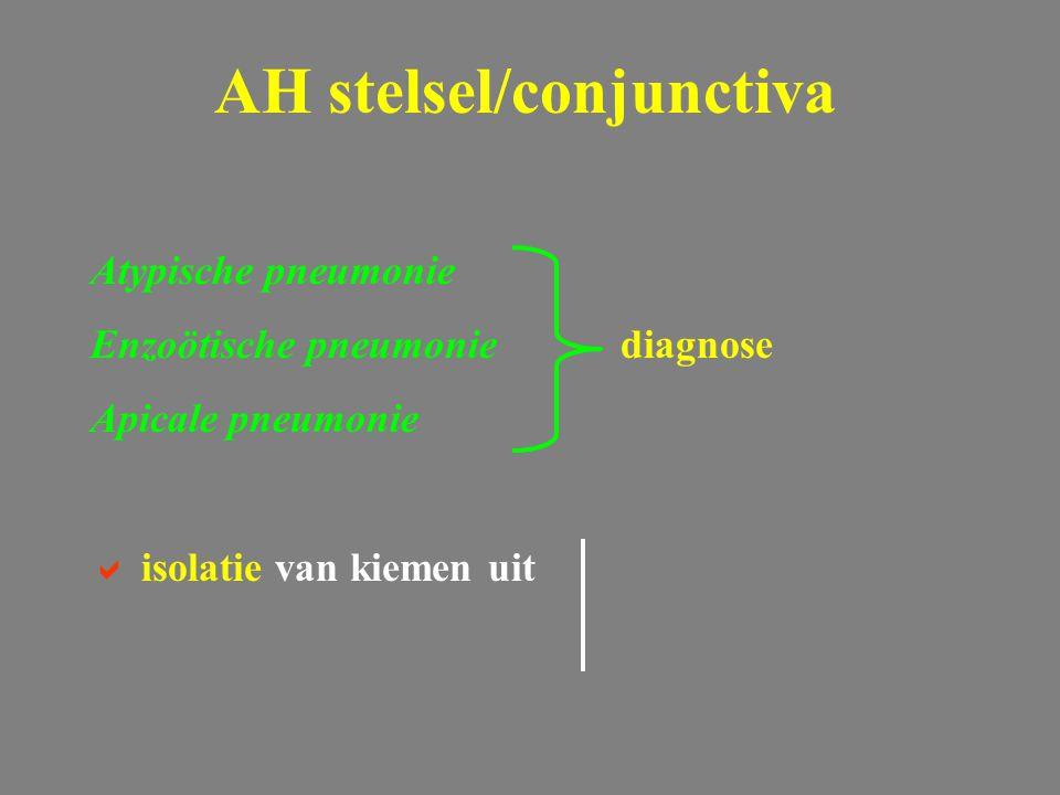 Atypische pneumonie Enzoötische pneumoniediagnose Apicale pneumonie  isolatie van kiemen uit AH stelsel/conjunctiva