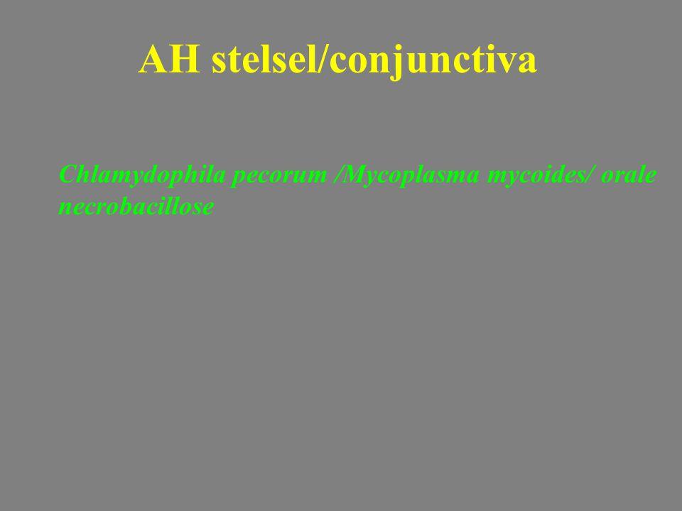 Chlamydophila pecorum /Mycoplasma mycoides/ orale necrobacillose AH stelsel/conjunctiva
