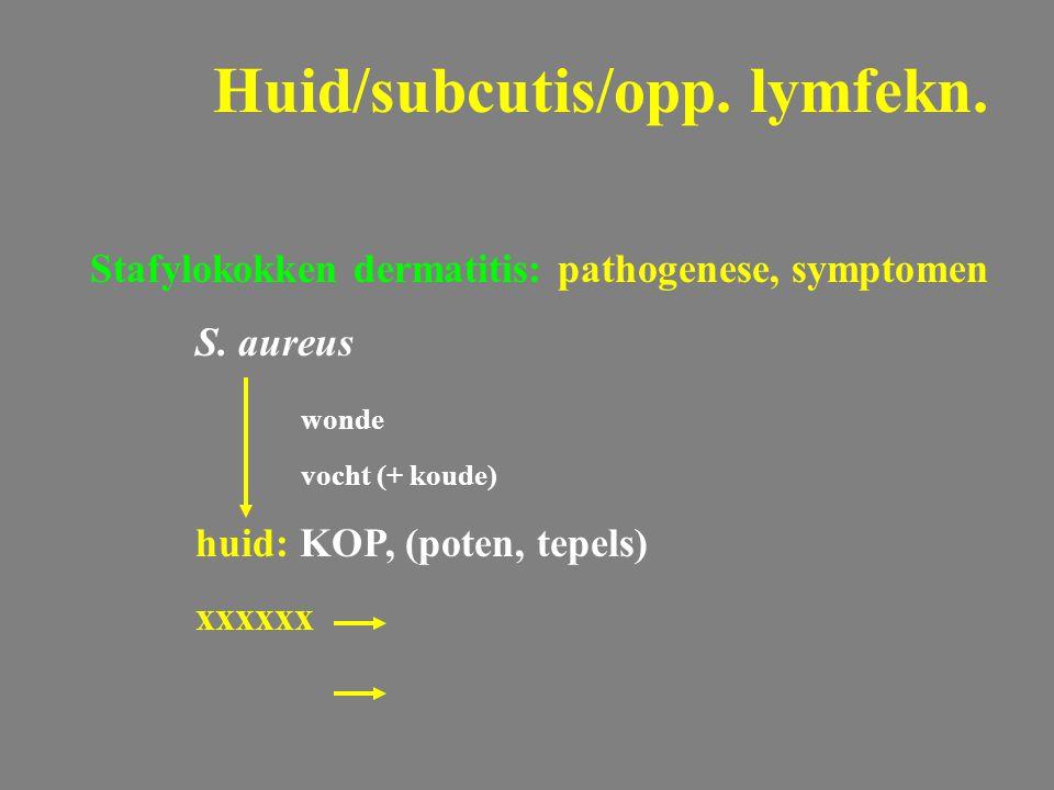 Stafylokokken dermatitis: pathogenese, symptomen S. aureus wonde vocht (+ koude) huid: KOP, (poten, tepels) xxxxxx Huid/subcutis/opp. lymfekn.
