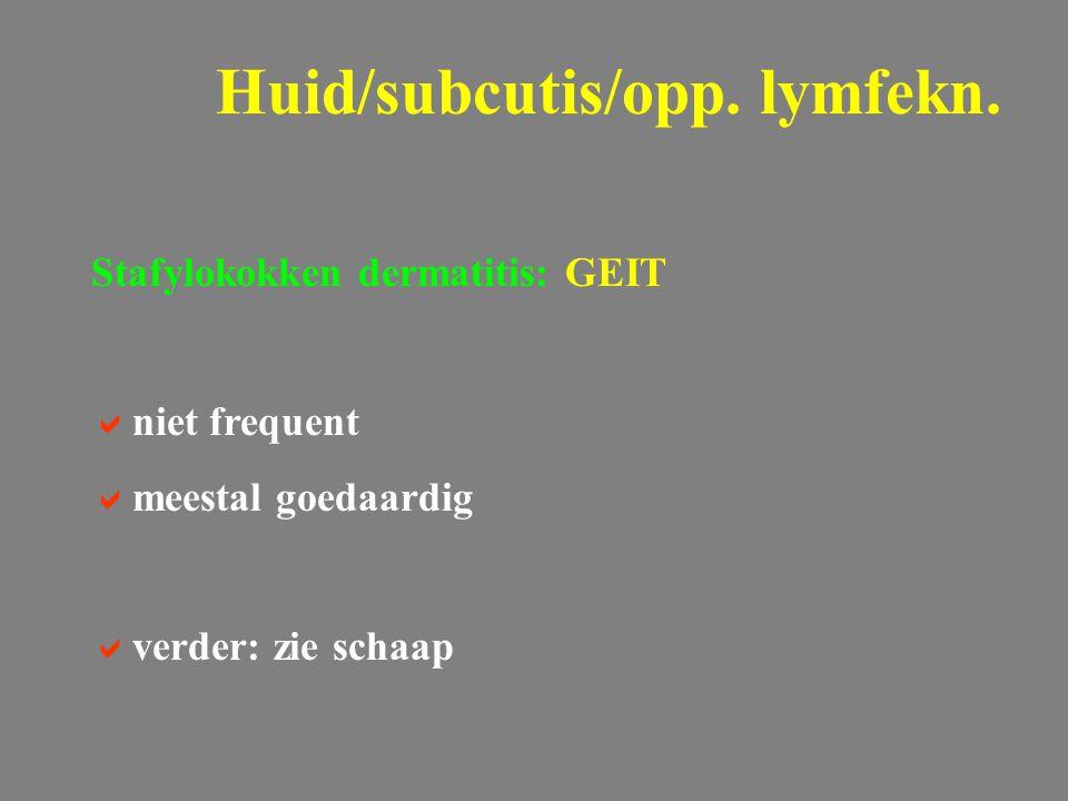 Stafylokokken dermatitis: GEIT  niet frequent  meestal goedaardig  verder: zie schaap Huid/subcutis/opp. lymfekn.