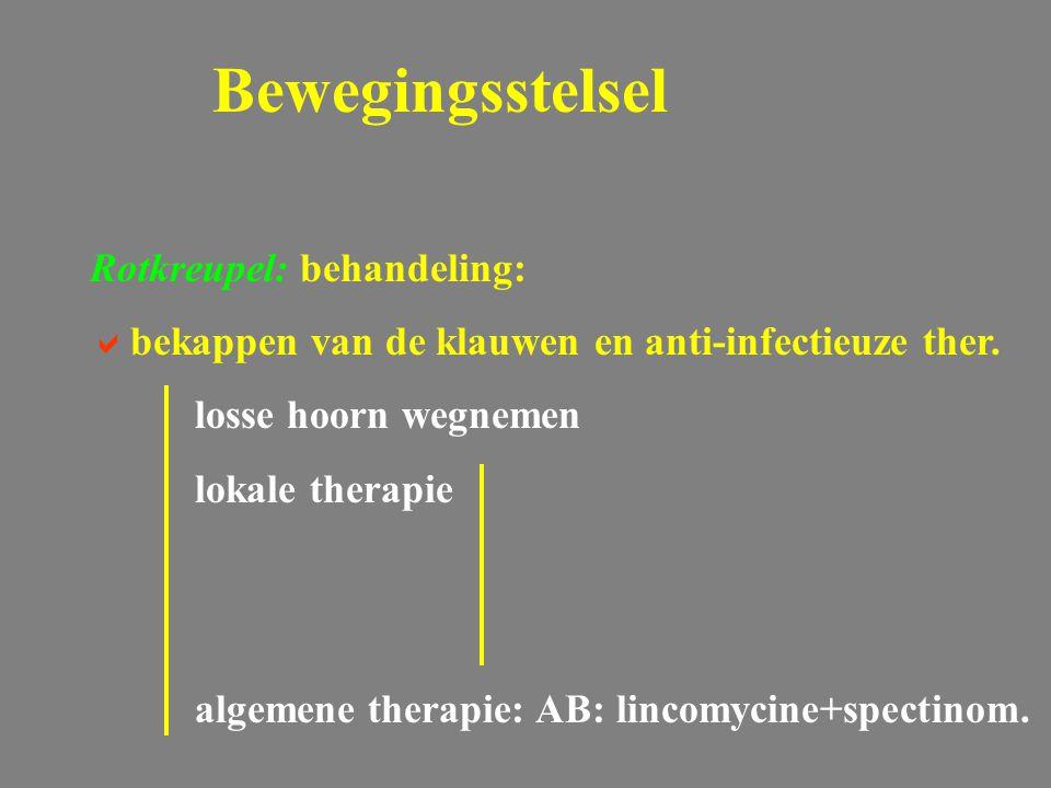 Rotkreupel: behandeling:  bekappen van de klauwen en anti-infectieuze ther. losse hoorn wegnemen lokale therapie algemene therapie: AB: lincomycine+s
