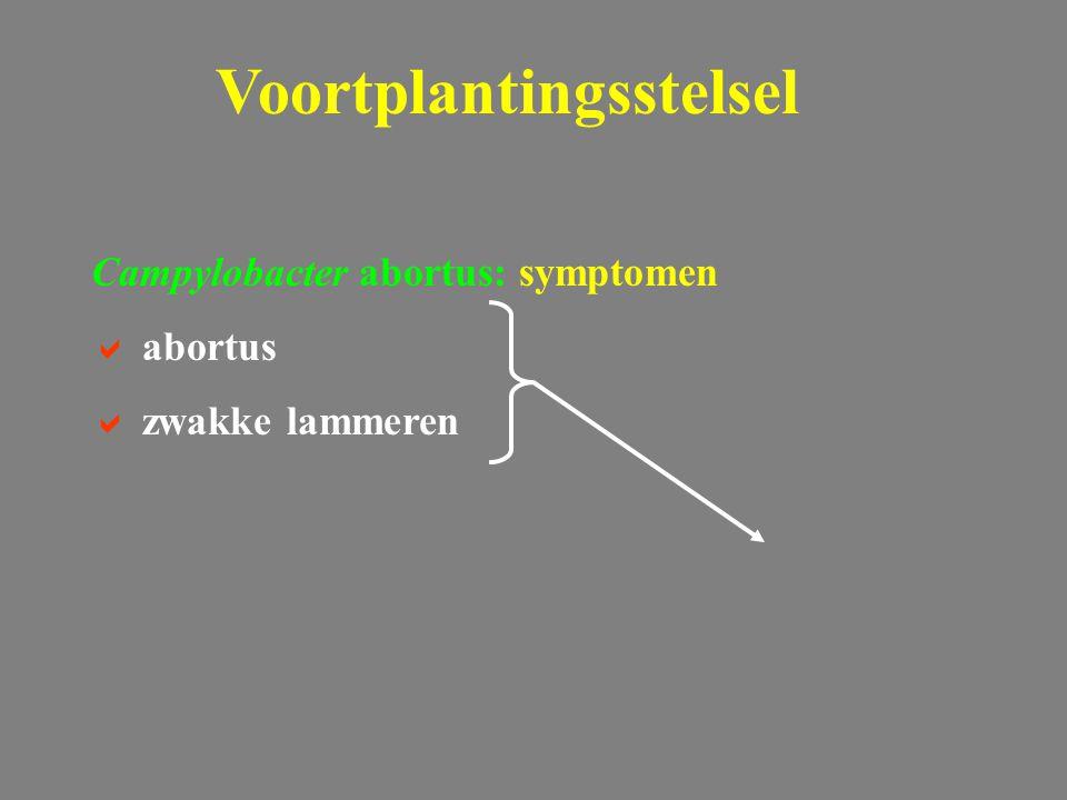 Campylobacter abortus: symptomen  abortus  zwakke lammeren Voortplantingsstelsel