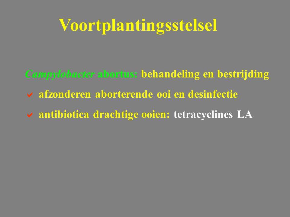 Campylobacter abortus: behandeling en bestrijding  afzonderen aborterende ooi en desinfectie  antibiotica drachtige ooien: tetracyclines LA Voortplantingsstelsel
