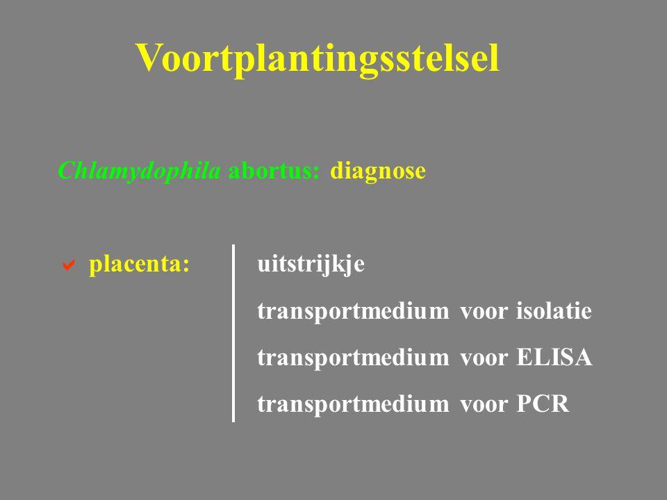 Chlamydophila abortus: diagnose  placenta:uitstrijkje transportmedium voor isolatie transportmedium voor ELISA transportmedium voor PCR Voortplanting