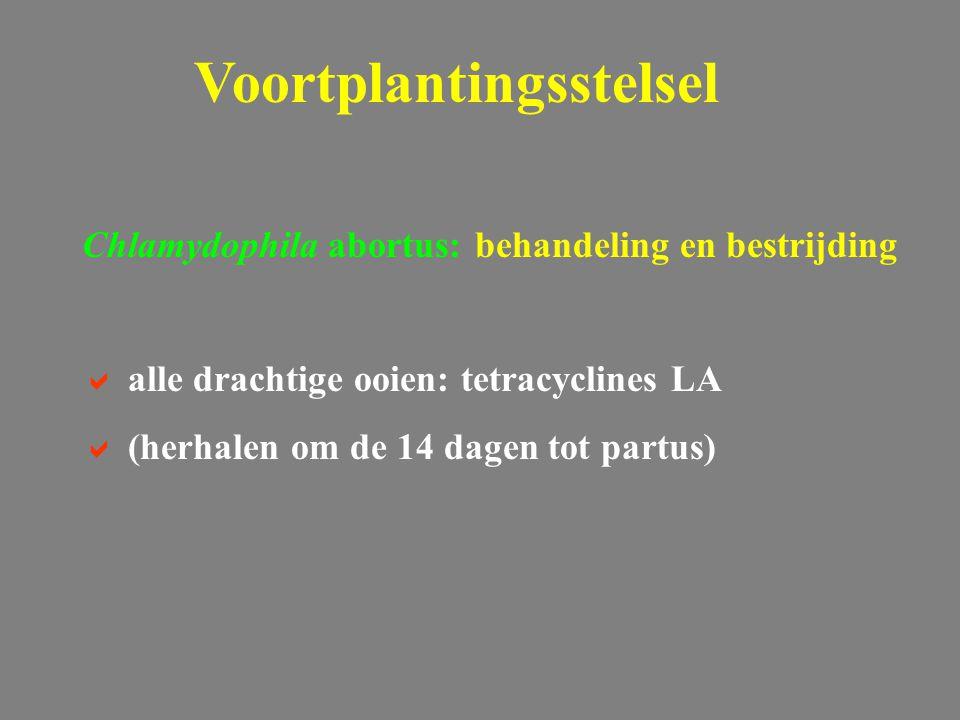 Chlamydophila abortus: behandeling en bestrijding  alle drachtige ooien: tetracyclines LA  (herhalen om de 14 dagen tot partus) Voortplantingsstelsel
