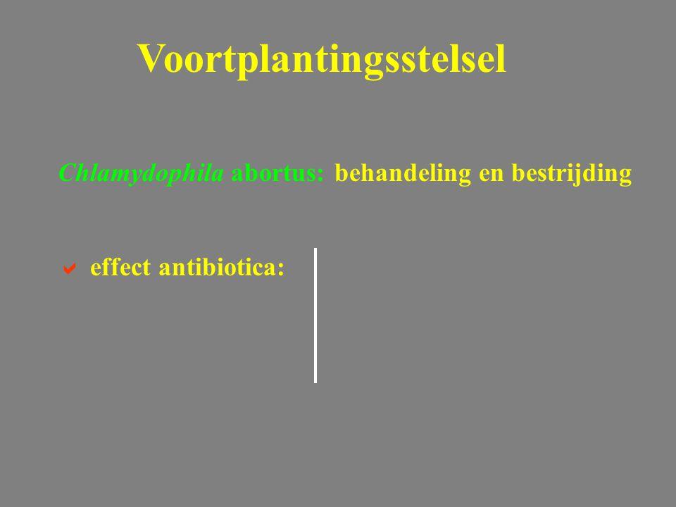Chlamydophila abortus: behandeling en bestrijding  effect antibiotica: Voortplantingsstelsel