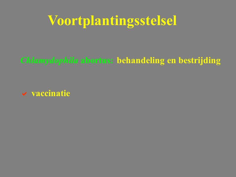 Chlamydophila abortus: behandeling en bestrijding  vaccinatie Voortplantingsstelsel