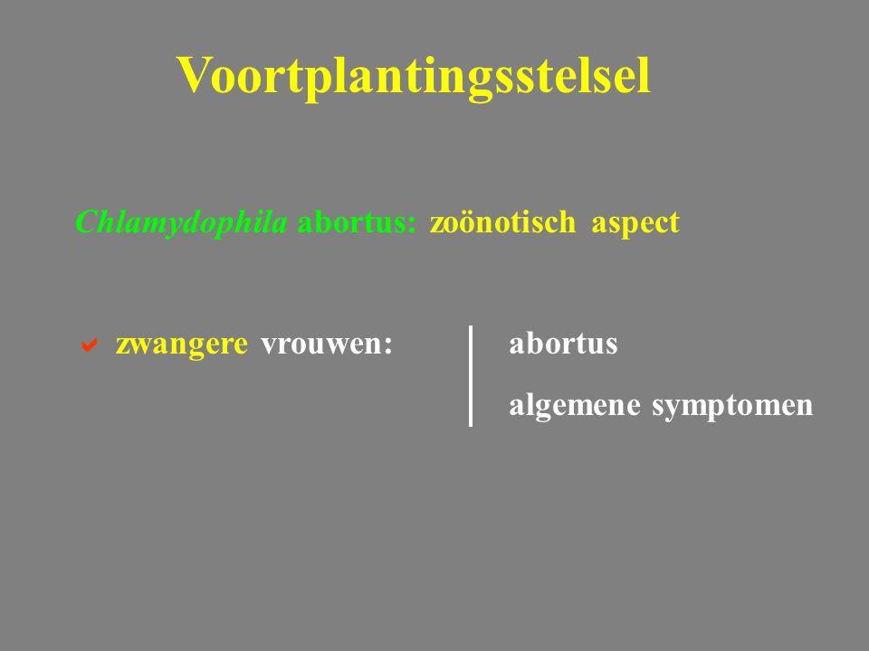 Chlamydophila abortus: zoönotisch aspect  zwangere vrouwen:abortus algemene symptomen Voortplantingsstelsel