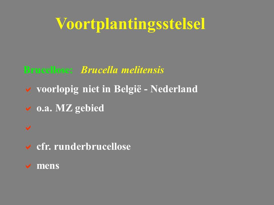 Brucellose: Brucella melitensis  voorlopig niet in België - Nederland  o.a.