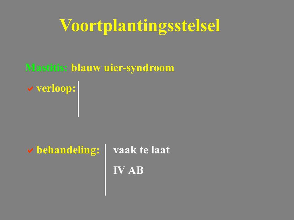 Voortplantingsstelsel Mastitis: blauw uier-syndroom  verloop:  behandeling: vaak te laat IV AB