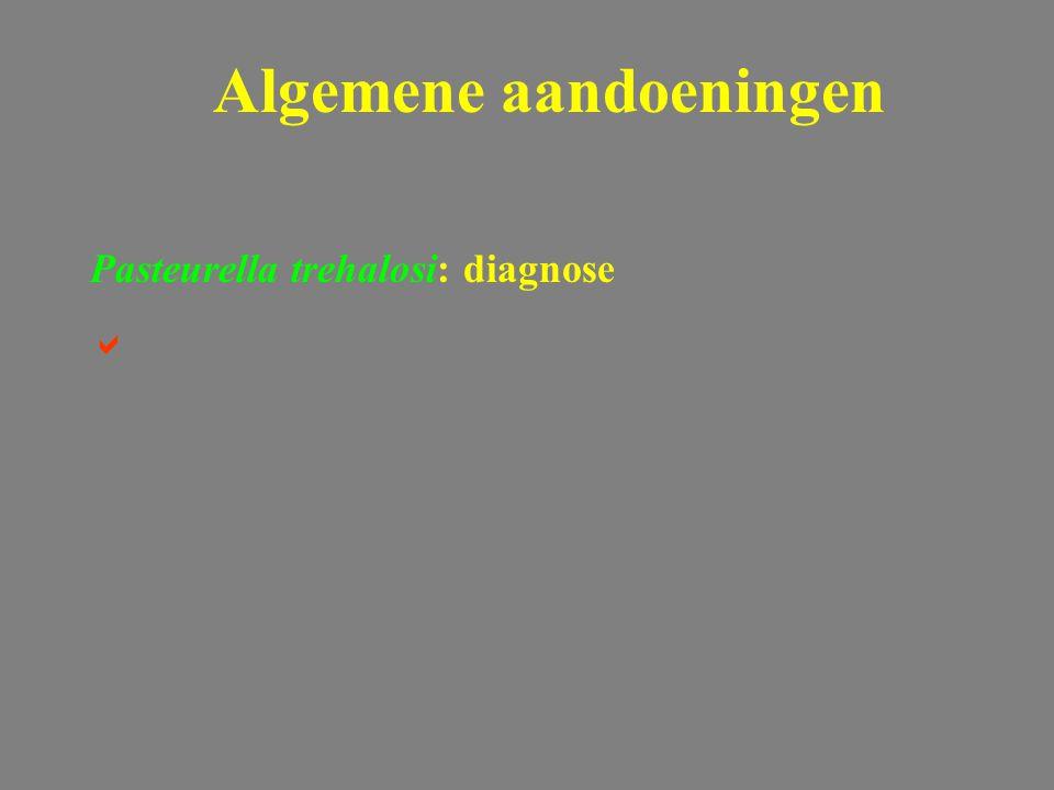 Pasteurella trehalosi: diagnose  Algemene aandoeningen