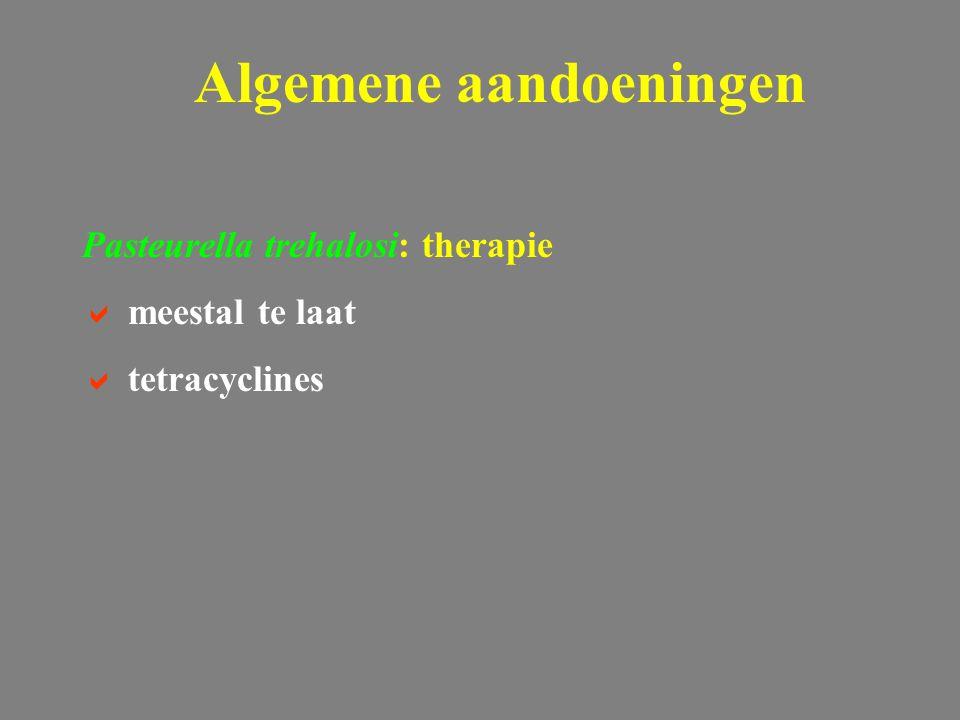 Pasteurella trehalosi: therapie  meestal te laat  tetracyclines Algemene aandoeningen