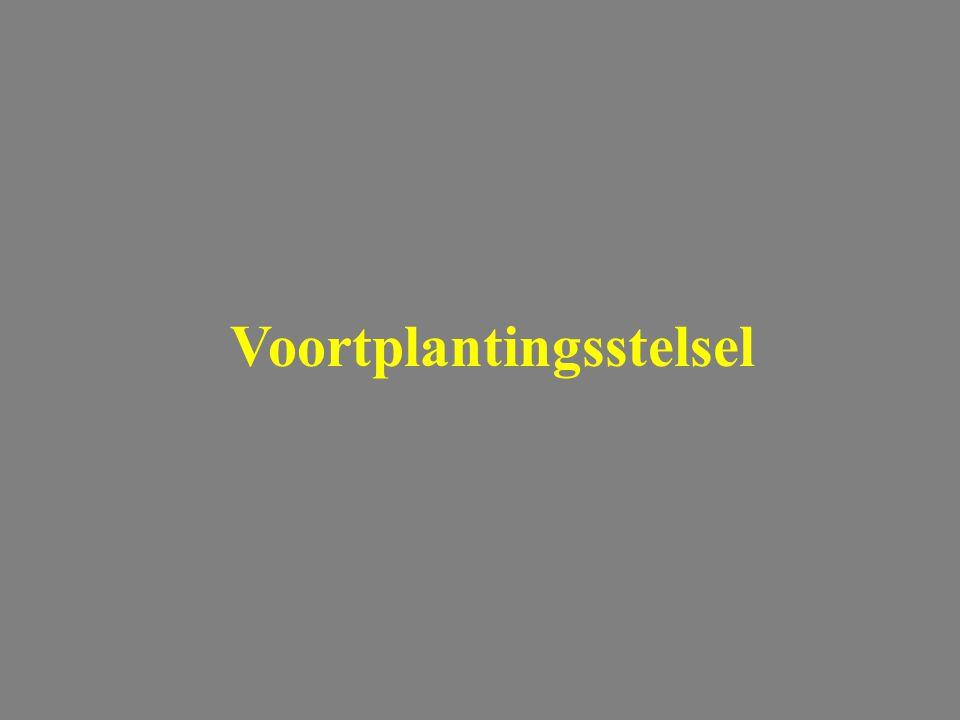 Chlamydophila abortus: diagnose Voortplantingsstelsel Stamp Immunofluoresc.