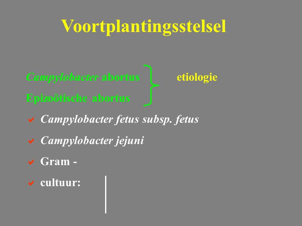 Campylobacter abortusetiologie Epizoötische abortus  Campylobacter fetus subsp. fetus  Campylobacter jejuni  Gram -  cultuur: Voortplantingsstelse