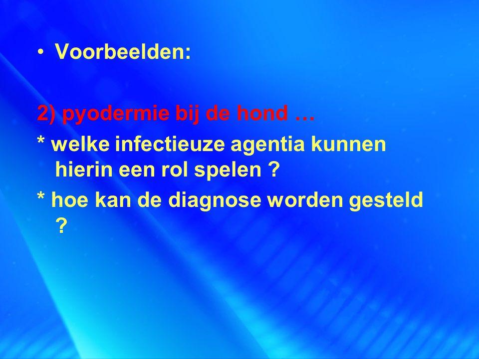 Voorbeelden: 2) pyodermie bij de hond … * welke infectieuze agentia kunnen hierin een rol spelen ? * hoe kan de diagnose worden gesteld ?