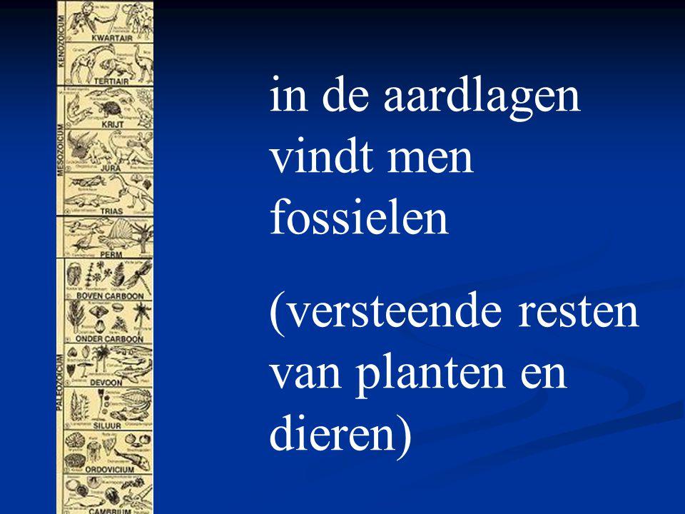 in de aardlagen vindt men fossielen (versteende resten van planten en dieren)