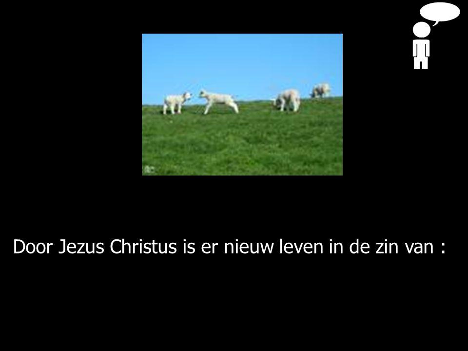 Door Jezus Christus is er nieuw leven in de zin van :