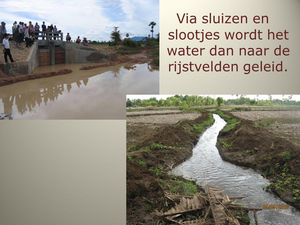 Via sluizen en slootjes wordt het water dan naar de rijstvelden geleid.