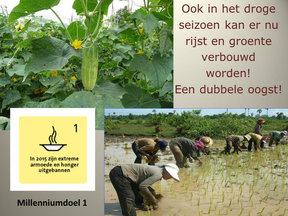 Ook in het droge seizoen kan er nu rijst en groente verbouwd worden! Een dubbele oogst! Millenniumdoel 1