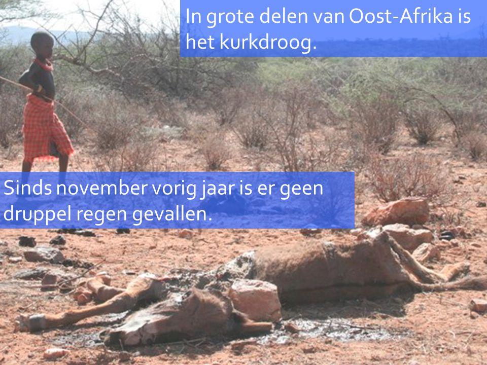 In grote delen van Oost-Afrika is het kurkdroog. Sinds november vorig jaar is er geen druppel regen gevallen.