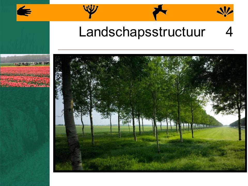 Landschapsstructuur 4